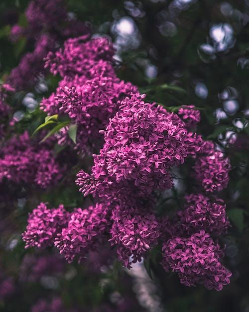 açık hava, Bahçe, bitki örtüsü, büyüme içeren Ücretsiz stok fotoğraf