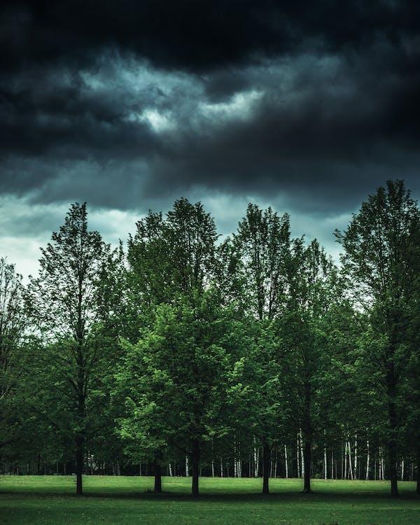 ánh sáng ban ngày, bình minh, cây