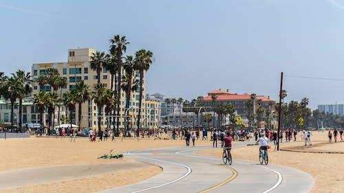 Photos gratuites de ensoleillé, palmiers, plage, vélos