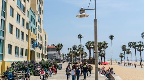 Photos gratuites de ensoleillé, palmiers, plage, venise