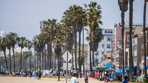 Δωρεάν στοκ φωτογραφιών με Βενετία, ηλιόλουστος, παραλία, φοίνικες
