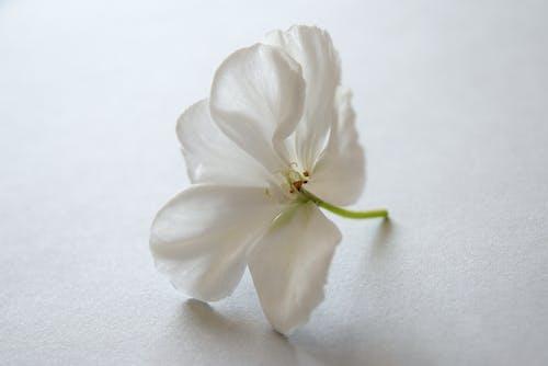 Foto profissional grátis de brilhante, cheiroso, colord, flor