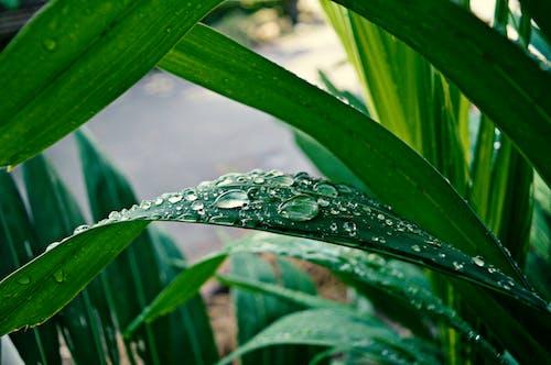 Immagine gratuita di acqua, ambiente, bagnato, concentrarsi