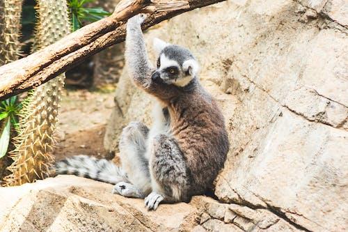 Imagine de stoc gratuită din amenințat cu dispariția, animal, animal sălbatic, arbore