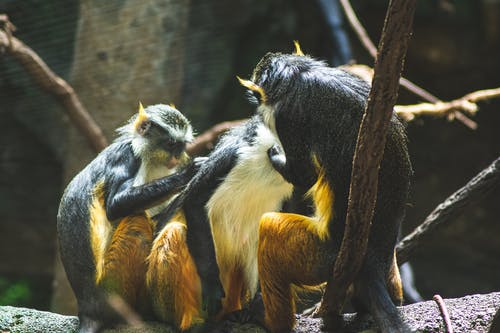 Selective Focus Photo of Group of Primates