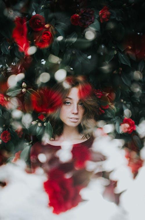 겨울, 관념적인, 꽃, 나무의 무료 스톡 사진