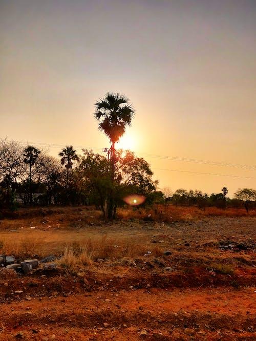 #mobilechallenge, #outdoorchallenge, altın rengi Güneş, doğada güzellik içeren Ücretsiz stok fotoğraf