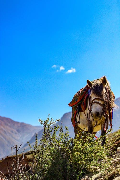 คลังภาพถ่ายฟรี ของ กลางแจ้ง, การถ่ายภาพ, ขี่ม้า, คนรักสัตว์
