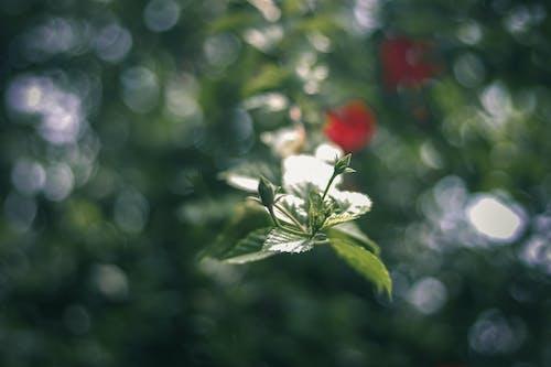 Бесплатное стоковое фото с зеленый, камера, лист, микро