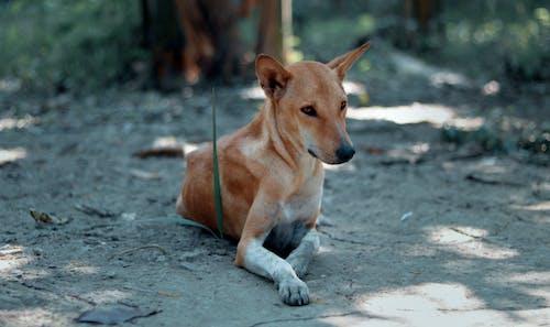 Бесплатное стоковое фото с животное, любовь, милый, природа