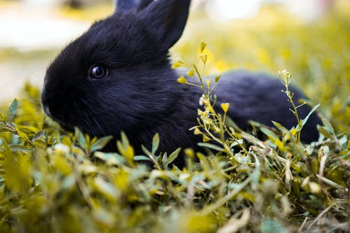 Shallow Focus Photography of Black Rabbit Facing Sideways