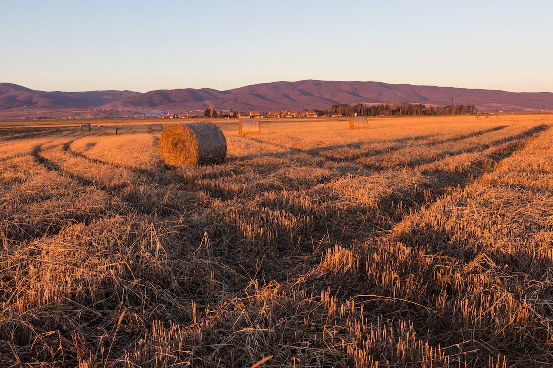 balík sena, farma, hřiště
