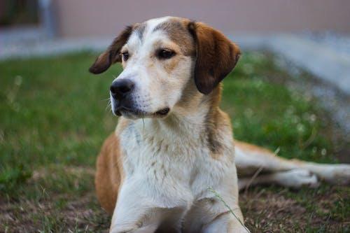 Foto d'estoc gratuïta de gos