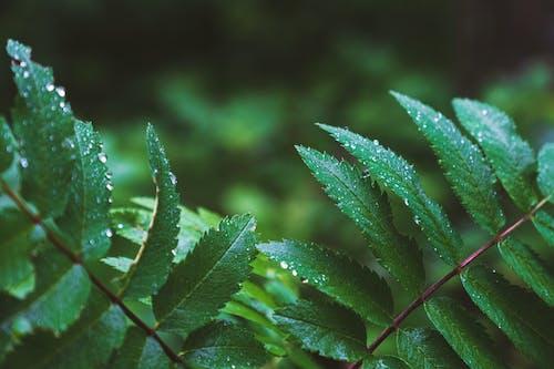 bitki örtüsü, çiy, çiy damlaları, ıslak içeren Ücretsiz stok fotoğraf