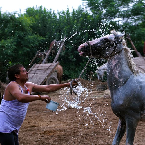 Man Splashing Water To A Horse