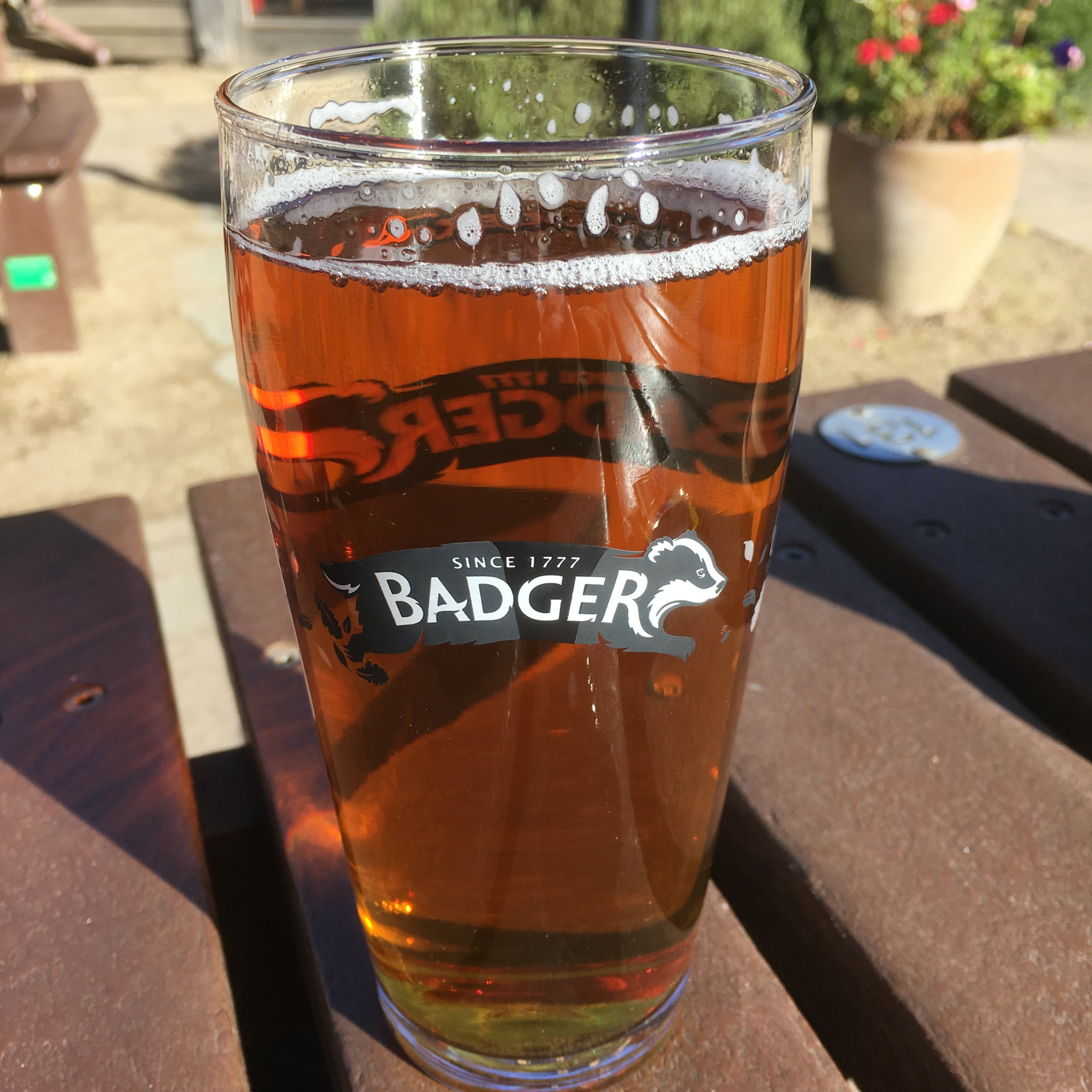 Free stock photo of Badger Beer Pint