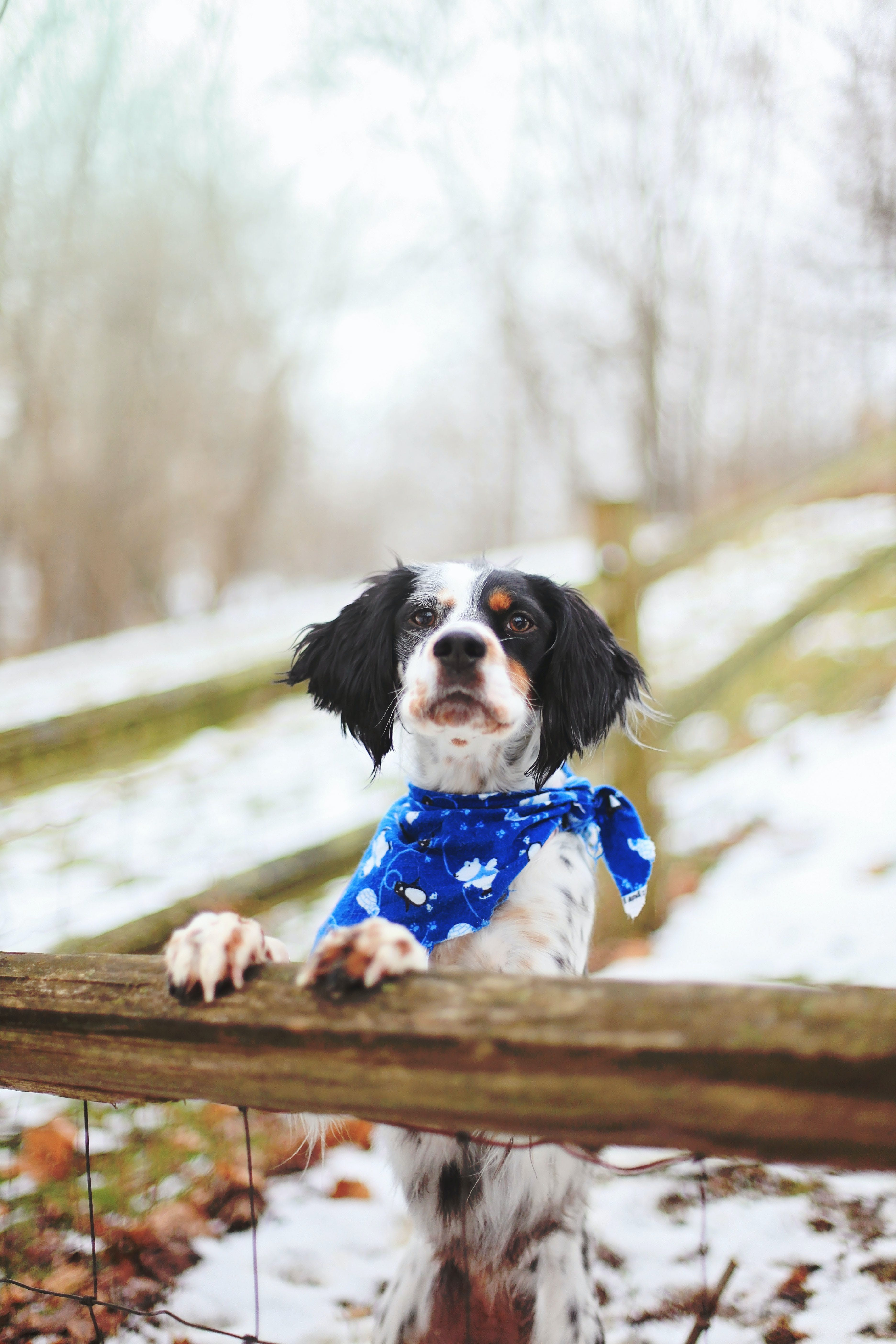 Long-coated Dog Hang on Wooden Fence Selective Focus Photography