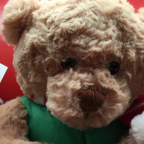 Free stock photo of teddybear