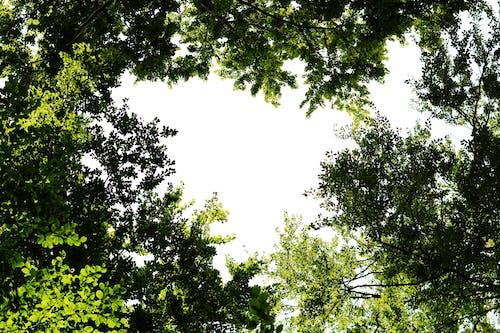 Fotos de stock gratuitas de árbol, bosque, Cielo oscuro, fondo