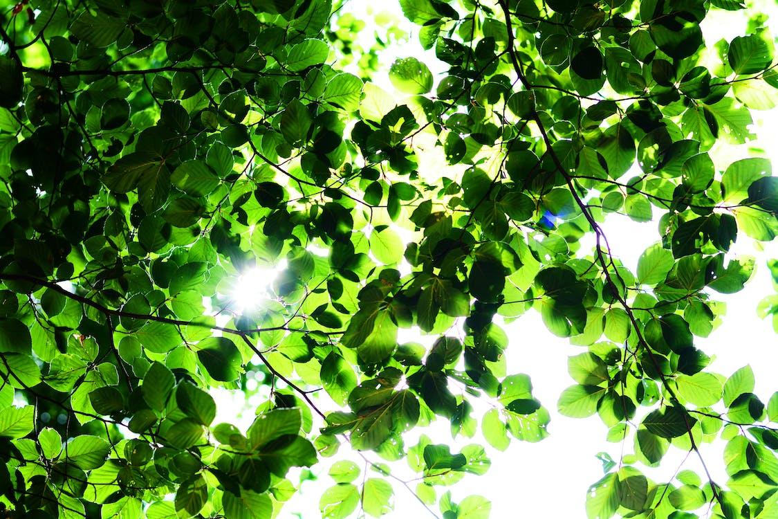 drzewa, jasny, lekki