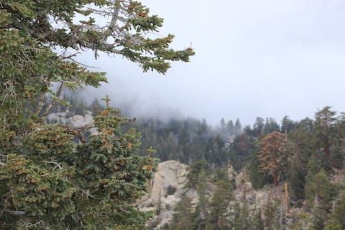 Free stock photo of mountain mist, san jacinto mountain