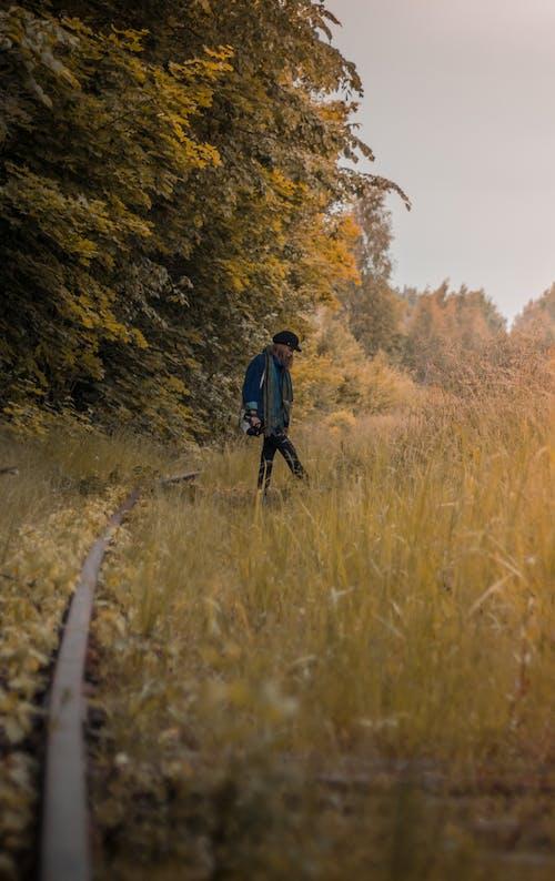 คลังภาพถ่ายฟรี ของ ฤดูใบไม้ร่วง, สีเหลือง, เส้นทางรถไฟ, ใบไม้