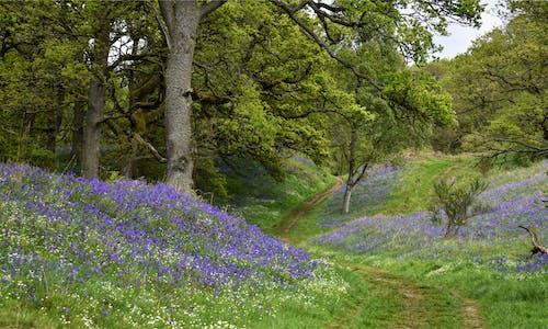คลังภาพถ่ายฟรี ของ บลูเบล, ป่า kinclaven, สก็อตแลนด์