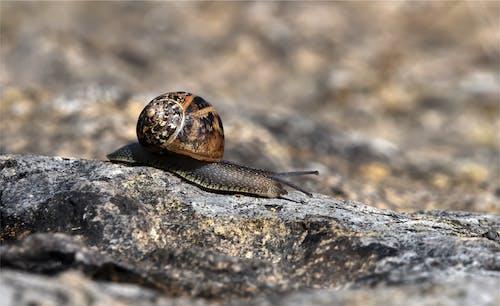 คลังภาพถ่ายฟรี ของ สก็อตแลนด์, สัตว์ป่า, หอยทาก, โรงนา