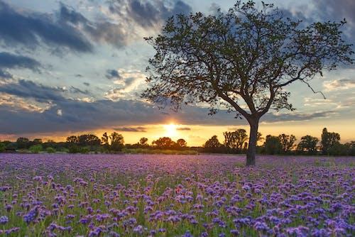 Бесплатное стоковое фото с вечернее солнце, голубой, зерновое поле