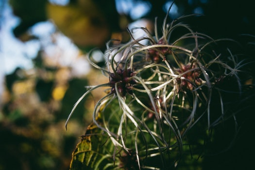 Free stock photo of light, nature, plant, blur