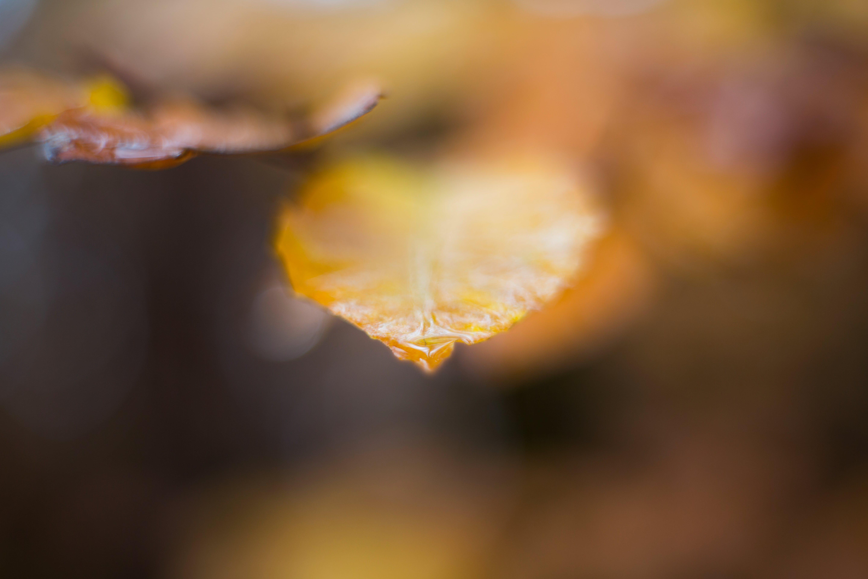 of autumn, beautiful, beauty, bloom