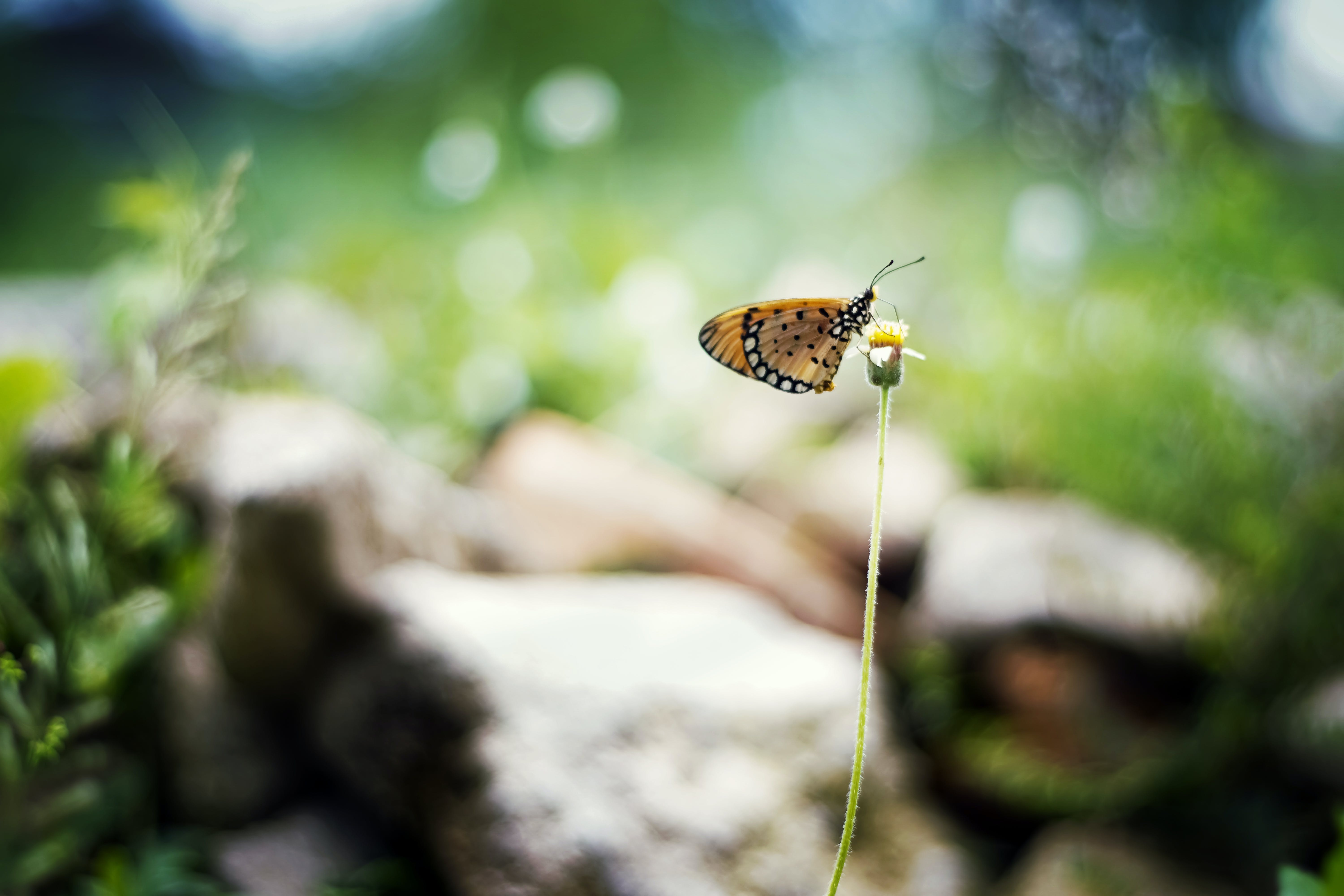 Yellow and Black Butterfly on Yellow Flower in Selective-focus Photography