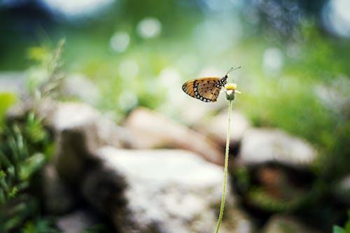 Immagine gratuita di ambiente, animale, colore, erba