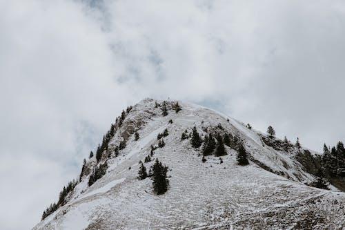 Darmowe zdjęcie z galerii z alpy, drzewa, fotografia przyrodnicza, góra