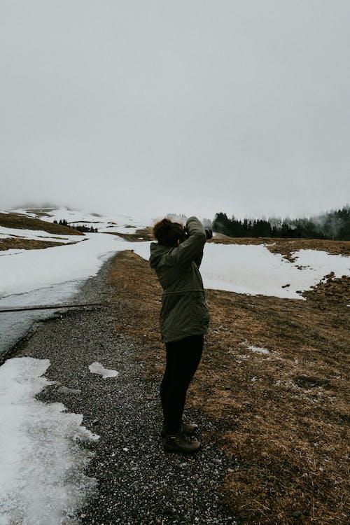 borovice, cestovať, chladný