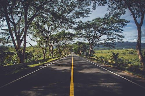 Immagine gratuita di alberi, ambiente, asfalto, autostrada
