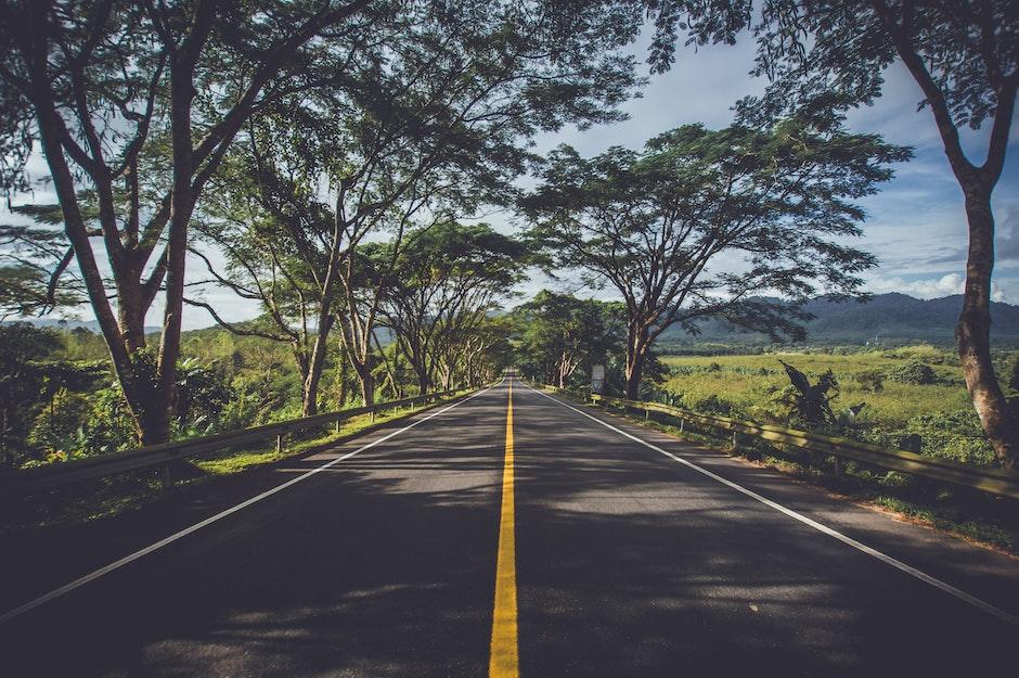 asphalt, environment, grass