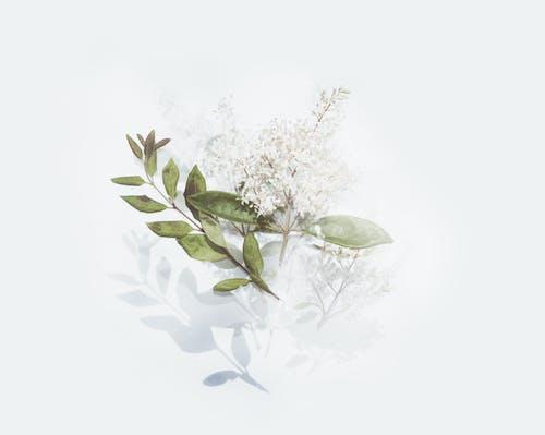 Ảnh lưu trữ miễn phí về hệ thực vật, họa tiết, lá, sự giản đơn