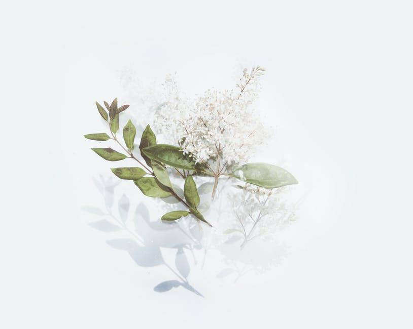 Green leafed plant with white flowers