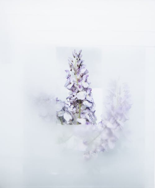 White-petaled Flowers on a White Background
