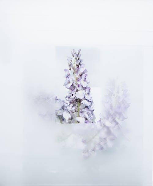 Foto d'estoc gratuïta de bonic, espígol, flor, flora