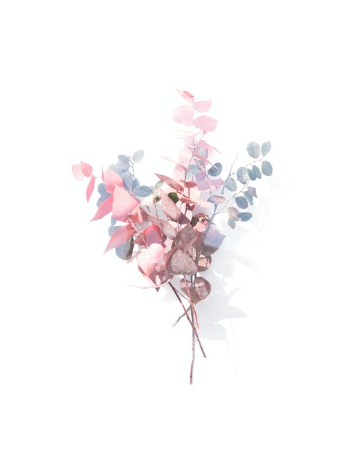 Pink grey and white petaled flowers clip art