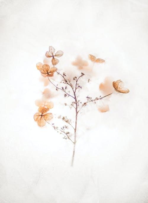 คลังภาพถ่ายฟรี ของ การถ่ายภาพหุ่นนิ่ง, ความเรียบง่าย, ดอกไม้, ต้นไม้