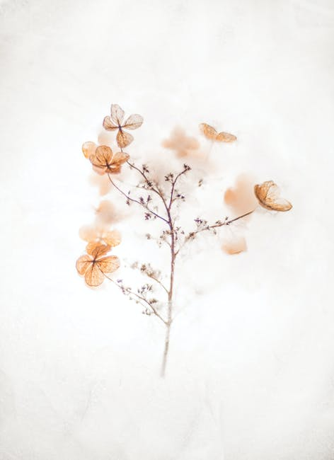 Brown 4 petaled flowers