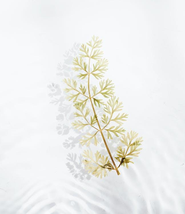Leaf Vignette