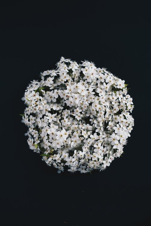 White Petaled Flowers on Black Surface