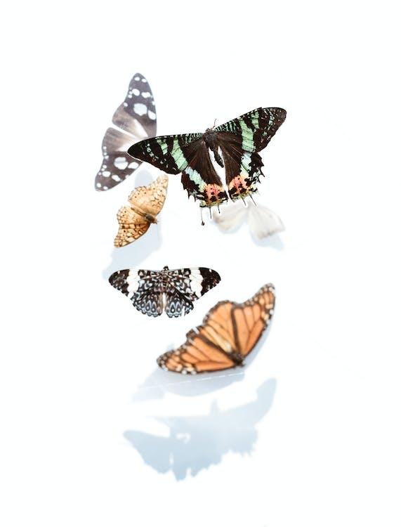 Close Up Photo of Assorted Butterflies
