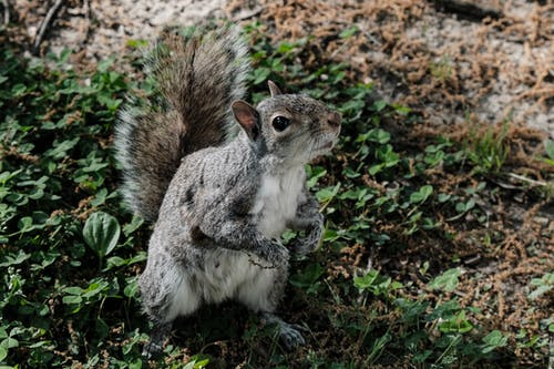 Shallow Focus Photo of Gray Squirrel