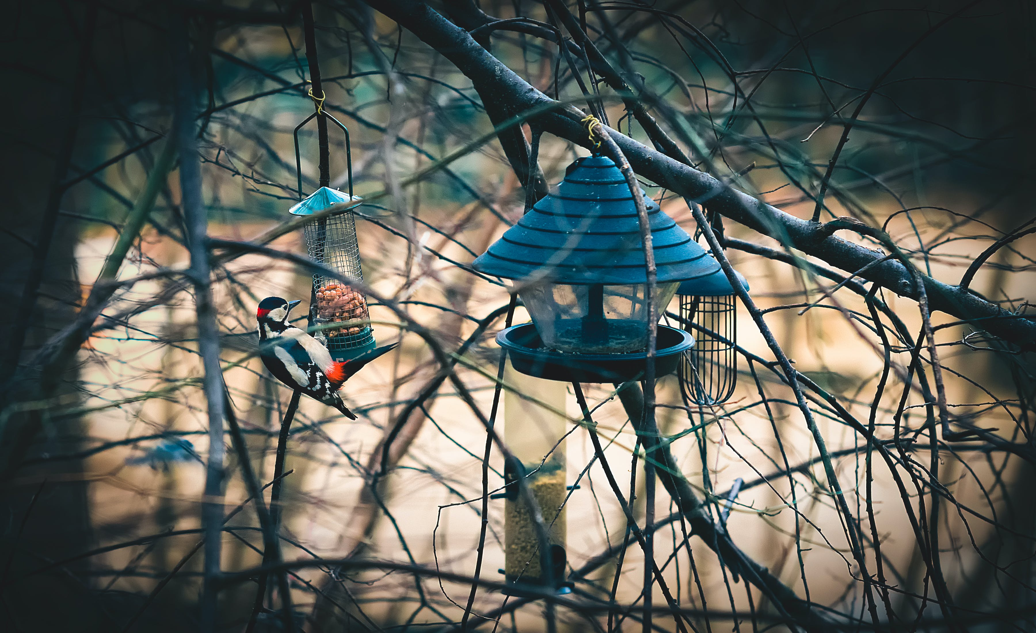 Selective Focus Photography of Downy Woodpecker Perching on Bird Feeder