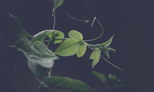 Photos gratuites de branche, brouiller, couleur, croissance